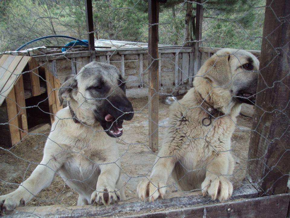 Wolftrack Ekibini Ziyaret Ettik-Ziyaret Fotoğrafları